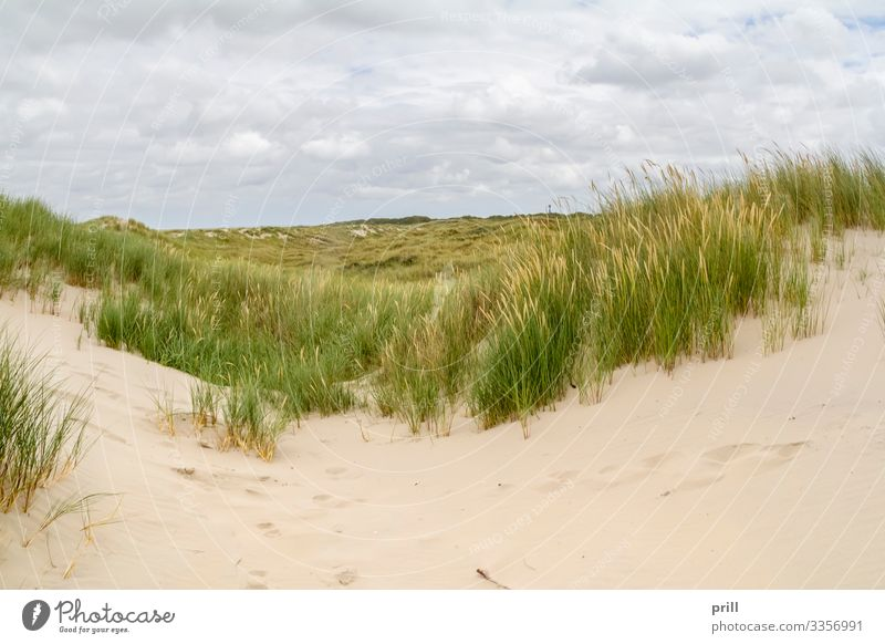 beach scenery at Spiekeroog Summer Beach Island Landscape Sand Coast North Sea Authentic stalk sand dune Dune East Frisland Friesland district Germany