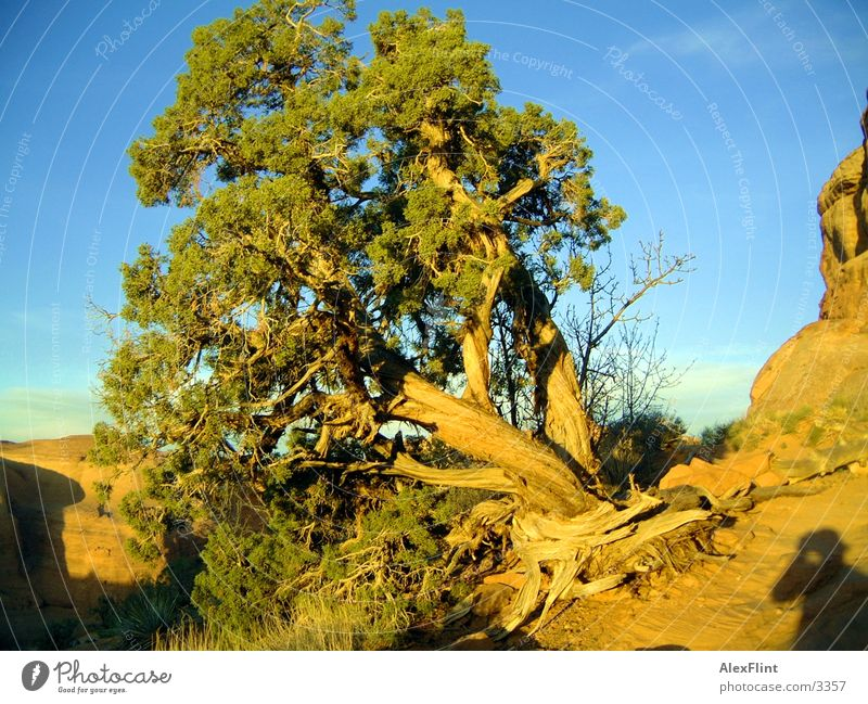 twisted tree Tree Branch Landscape