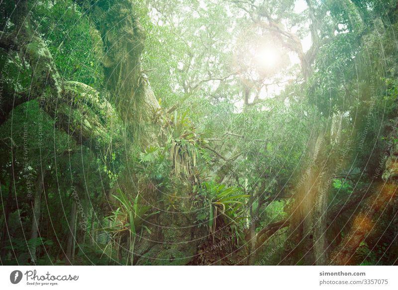 jungles Environment Nature Landscape Plant Climate Virgin forest Amazonas Tree Creeper CO2 emission Colour photo Exterior shot
