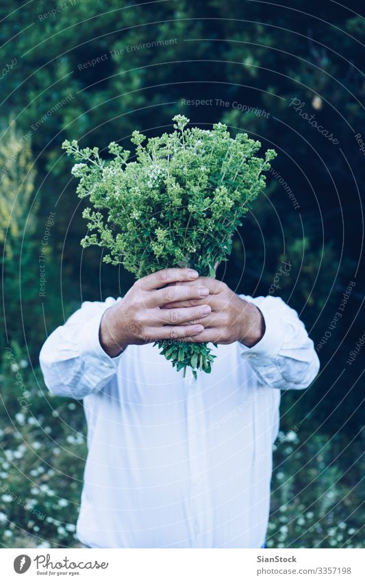Man is holding a bouquet or oregano Herbs and spices Summer Mountain Garden Adults Hand Nature Plant Leaf Bouquet Fresh Natural Wild Green Oregano Organic food