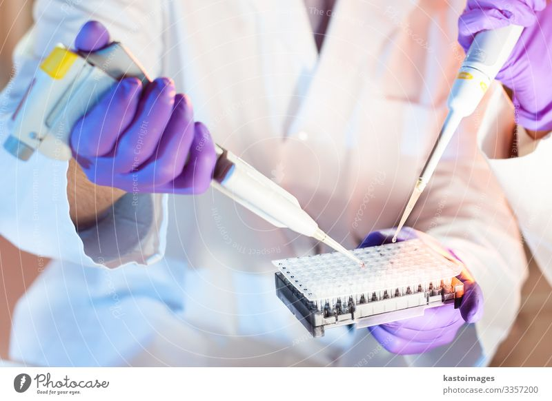 Life science professionals pipetting master mix solution into the PCR 96 well micro plate using multi channel pipette. Plate Health care Medication