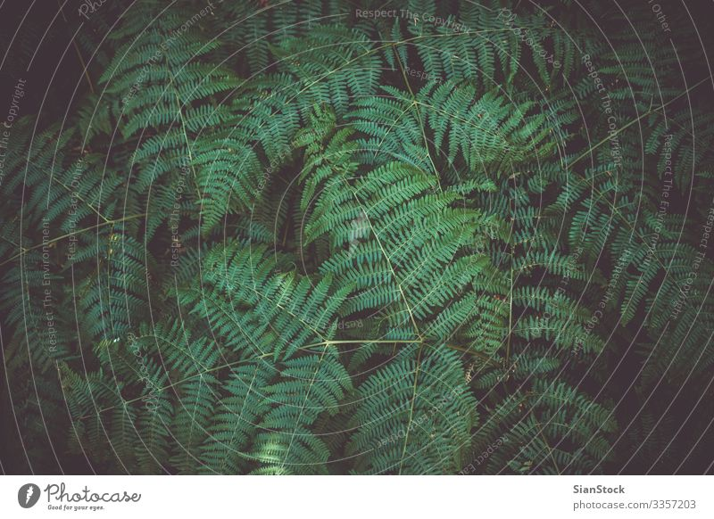 Fern leaf plant background Summer Garden Environment Nature Plant Grass Leaf Forest Growth Fresh Natural New Wild Green Colour fern ferns Zealand spring