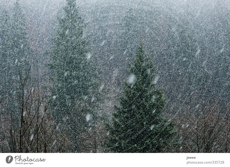 Nature Green White Winter Black Forest Dark Cold Gray Snowfall Bad weather