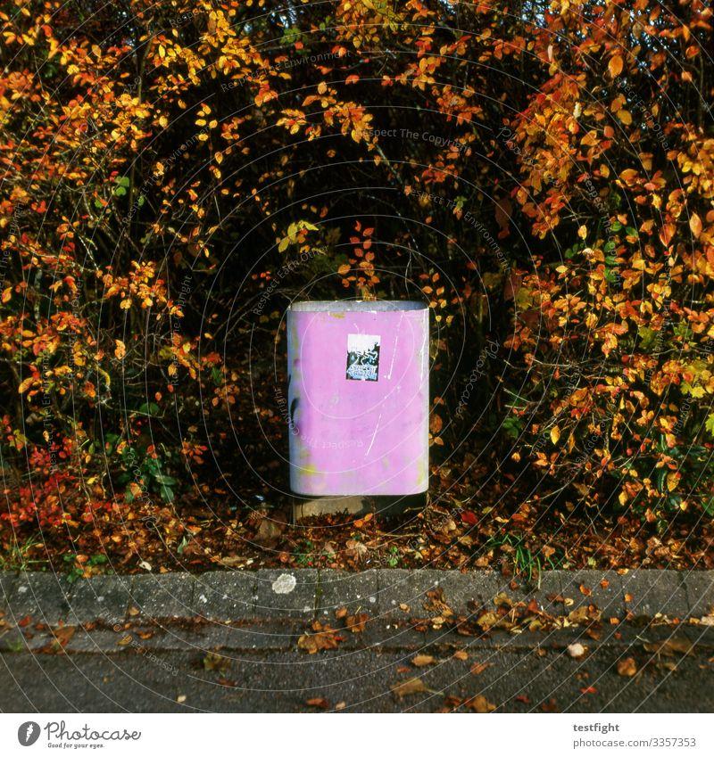 rubbish bin Public Trash Dispose of off shrub Hedge Autumn pink Old Graffiti