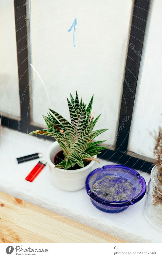 At the window Living or residing Flat (apartment) Decoration Plant Window Lighter Ashtray Digits and numbers Esthetic Authentic Smoking Photos of everyday life