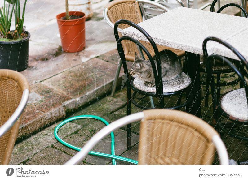 cat Furniture Chair Table Animal Pet Cat 1 Hose Flowerpot Observe Sit Authentic Café Restaurant Colour photo Exterior shot Deserted Day