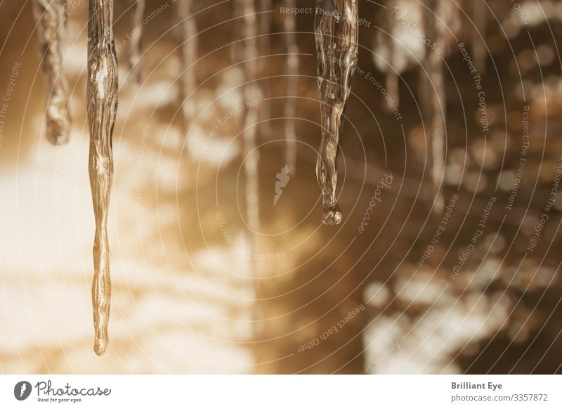icicles Winter Nature Ice Frost Warmth Forest Esthetic Simple Glittering Near Natural Above Cold Depth of field Three-dimensional Icicle Melt Sunlight Dawn Many