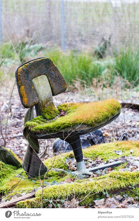 Sit !! Ew! Forest Moss Exterior shot Nature Plant Deserted Mushroom Colour photo Green Woodground Natural Landscape Chair Office chair Desk chair Environment