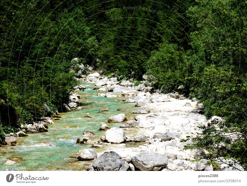 Wild Isonzo river and green wood near Trenta Relaxation Vacation & Travel Tourism Adventure Summer Environment Nature Landscape Sky Tree Park Forest Rock Alps