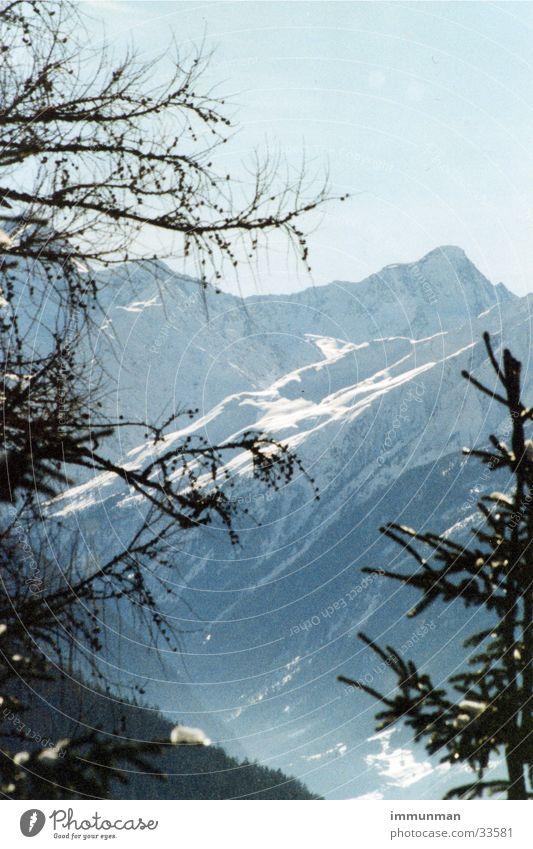 Sky Tree Winter Snow Mountain Glacier Valley Spruce