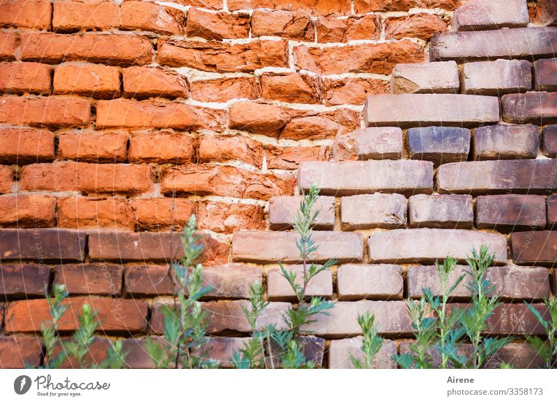 block Wall (barrier) masonry Brick construction Brick red brick Tall green Weed green stuff Tuft of grass Brick wall Bricks obliquely Colour tone Old Broken