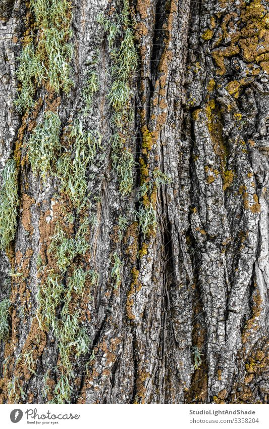 Mossy tree bark Beautiful Nature Tree Forest Wood Old Natural Green Colour background Consistency textured mossy Crack & Rip & Tear colorful colourful Forestry
