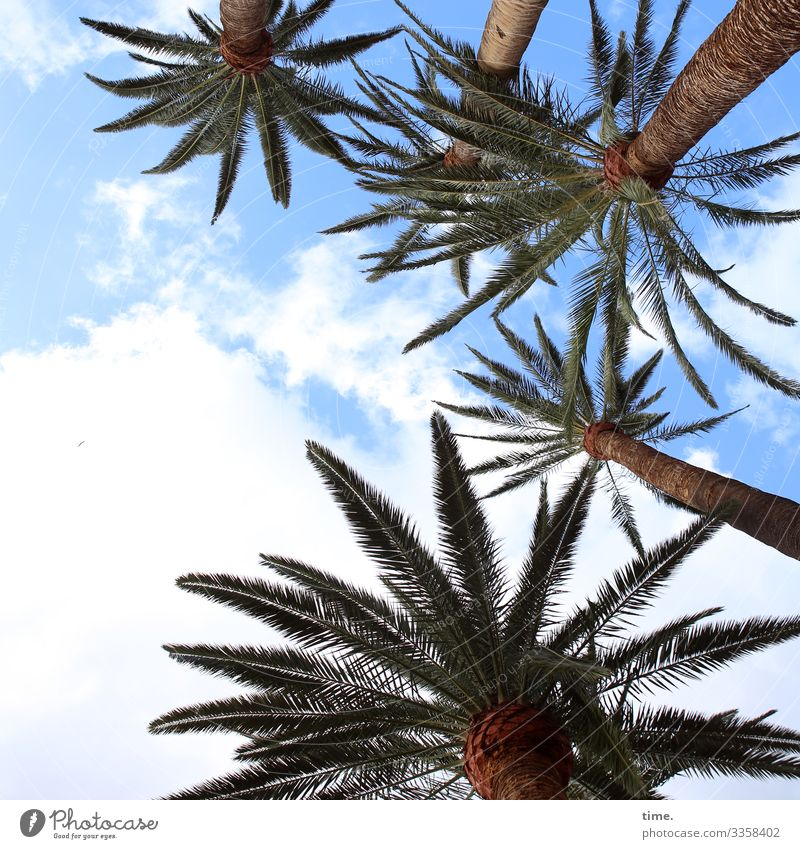 Gomeranian Palm Gang Palm tree Threat rest Break travel vacation Airy Fresh Back-light in common at the same time twigs Protection Inspiration Perspective Force