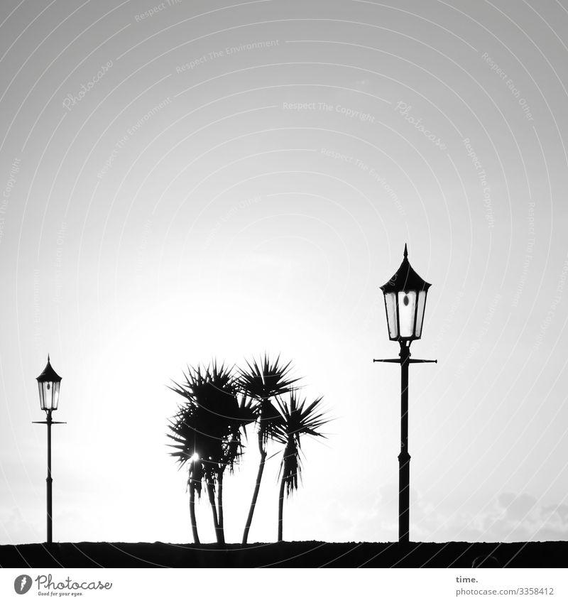 informal meeting with guards Palm tree Lamp Sky Horizon Silhouette B/W
