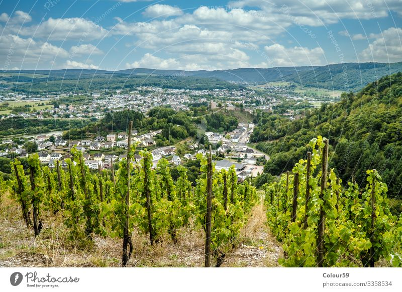 Vineyard in Trittenheim Vacation & Travel Summer Contentment Cochem Riesling Background picture Germany Moselle Europe Valley Grape harvest Bunch of grapes