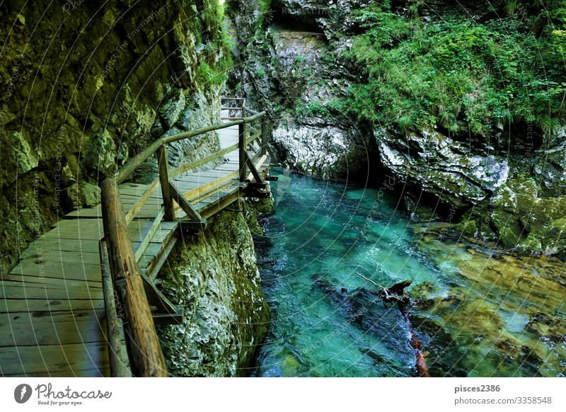 Vintgar Gorge wooden path and beautiful Radovna river Vacation & Travel Tourism Summer Hiking Environment Nature Landscape Moss Park Rock Alps Canyon River