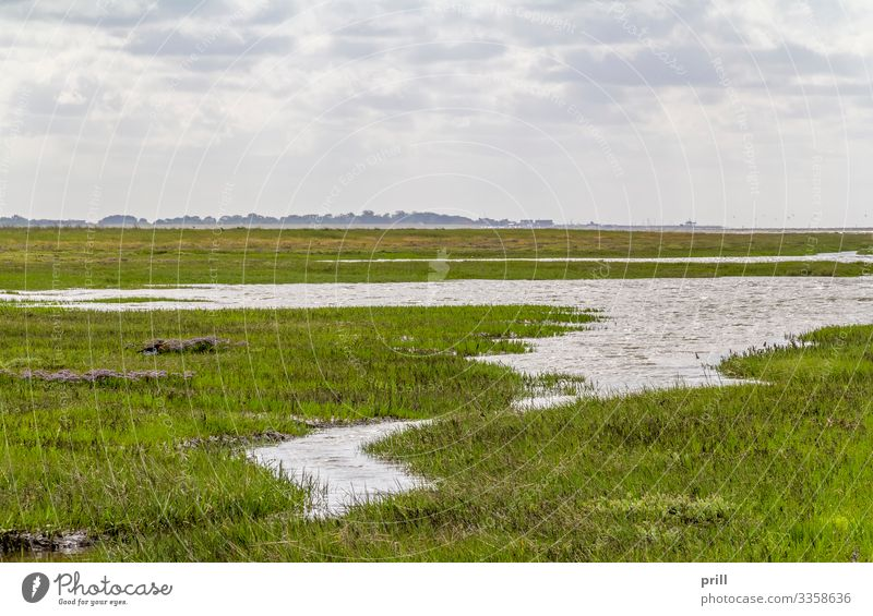 coastal scenery in Eastern Frisia Ocean Plant Water Coast North Sea Authentic East Frisland Northern Germany Low tide Slick Mud Overgrown bank wittmund