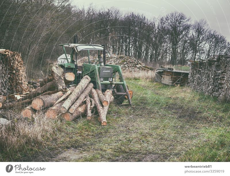 Old German tractor at the lumberyard in nature Nature Landscape Plant Sky Tree Grass Forest Transport Tractor german Lumberyard Firewood Wood wood - material