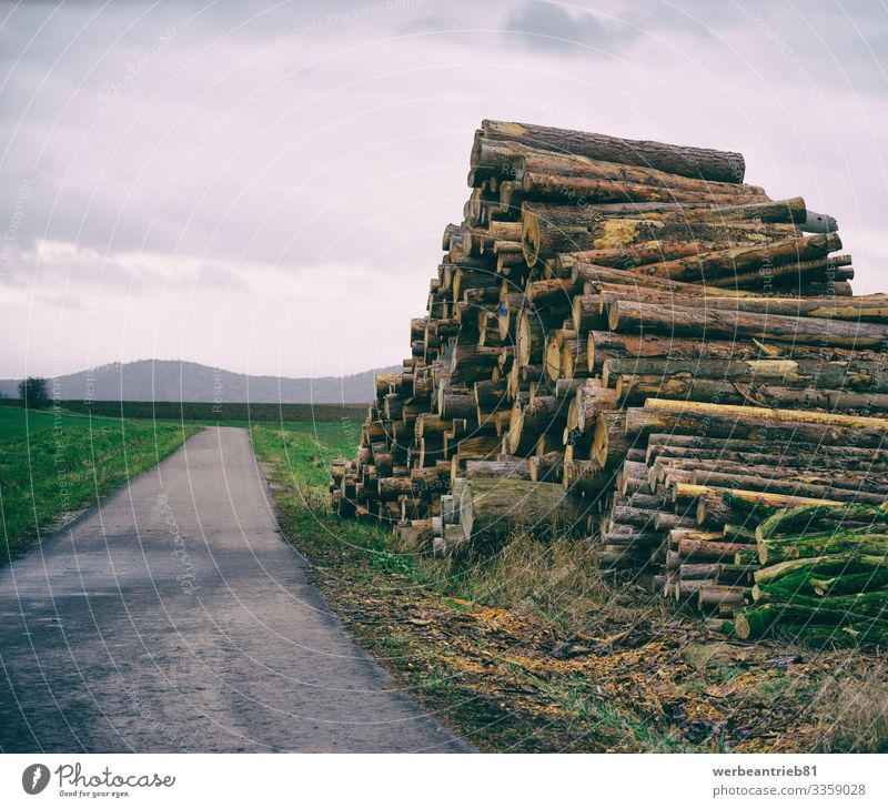 Stacked firewood beside a small road Calm Environment Nature Landscape Plant Sky Grass Transport Street Lanes & trails Long Firewood Country road way