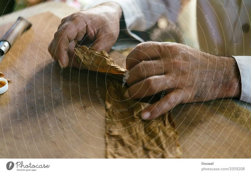 handmade cigar making, viñales - cuba Lifestyle Island Table Masculine Man Adults Male senior Hand 1 Human being 45 - 60 years Culture Nature Leaf Village Town