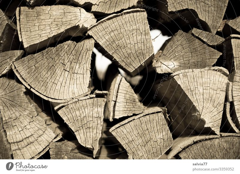 Firewood stacks Close-up Structures and shapes Wood Fossil fuel Exterior shot Stack of wood Deserted Energy Supply Detail Nature Brown Pattern Forestry Tree