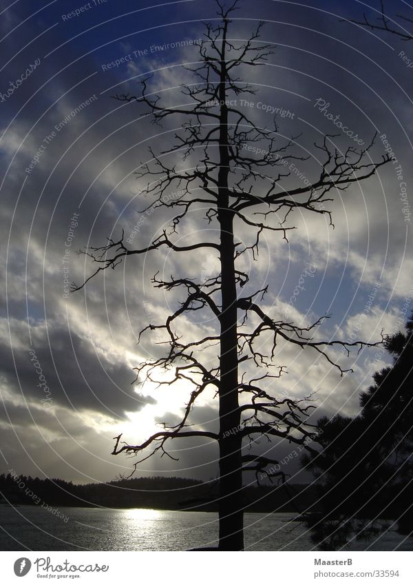 Twilight Zone Sun Nature Landscape Clouds Bad weather Tree Fjord Norway Threat Dark Gloomy Apocalyptic sentiment Branchage tree skeleton dead tree Sandvika