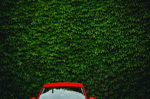 Red car against a green wall. The upper part of a red car in front of a green wall of leaves. Design Harmonious Trip Car Environment Summer Beautiful weather