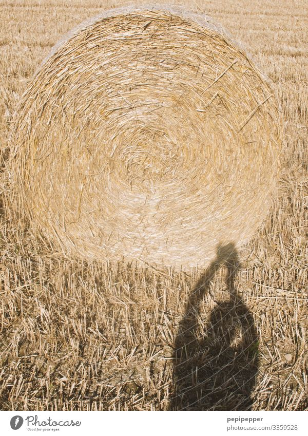 Crop circle Leisure and hobbies Vacation & Travel Camera Human being Masculine Man Adults Body Arm 1 Nature Landscape Earth Autumn Beautiful weather Plant Grass