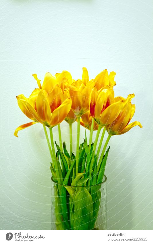 tulip bouquet Flower Blossoming Blossom leave Stalk Garden Deserted Nature Plant Calm Copy Space Bouquet Spring Spring flower Spring flowering plant Yellow Gold
