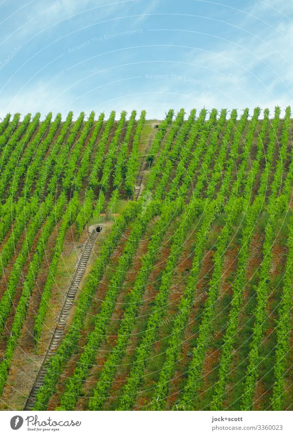 Vineyard Agriculture Forestry Animal Sky Climate Weather Agricultural crop Franconia Stripe Growth Authentic Exceptional Long Above Many Blue Green Moody