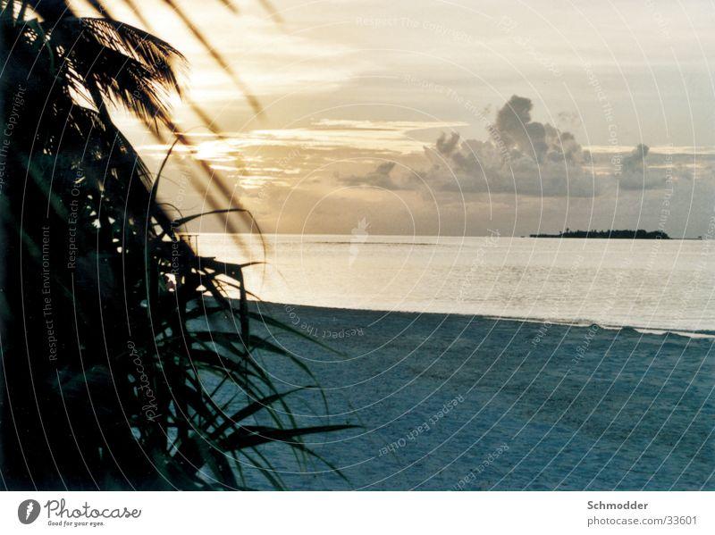Maldives Beach Sunset Ocean Palm tree Water Island