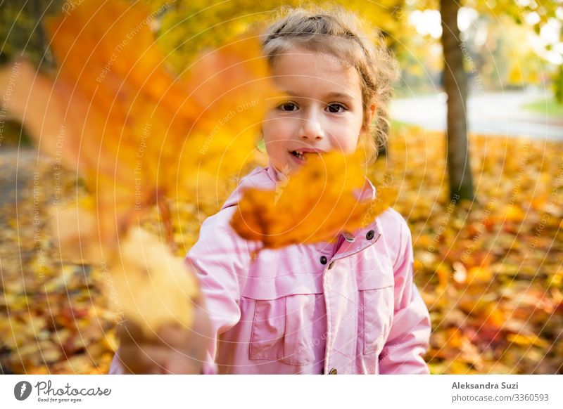 Cute little girl with missing teeth playing with yellow fallen leaves in autumn forest. Showing leaf to the camera. Happy child laughing and smiling. Sunny autumn forest, sun beam.