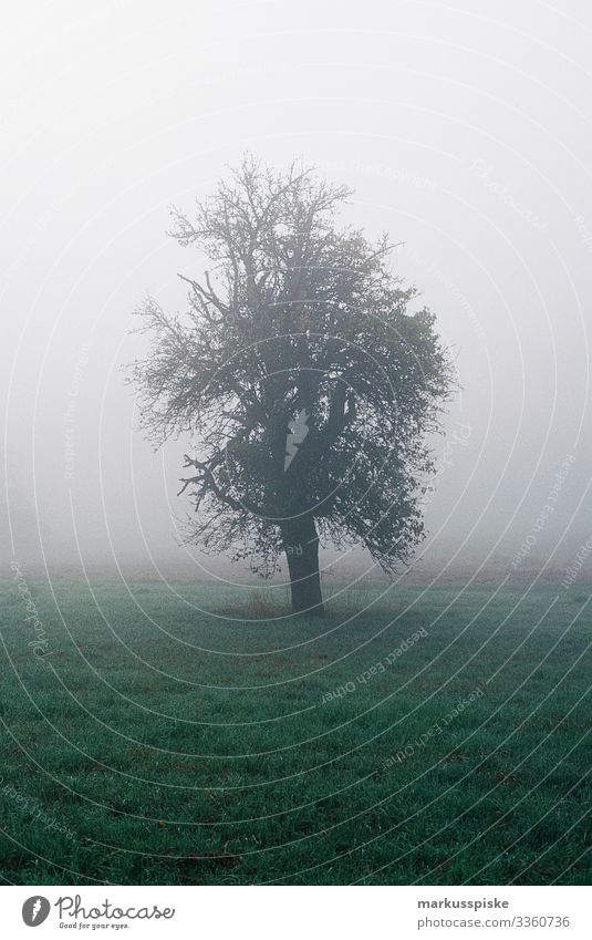 Foggy Morning Tree analog photography Analog analogue photography 35mm film photography Film Scan Leica R7 natural foggy tree morning meadow grass branch