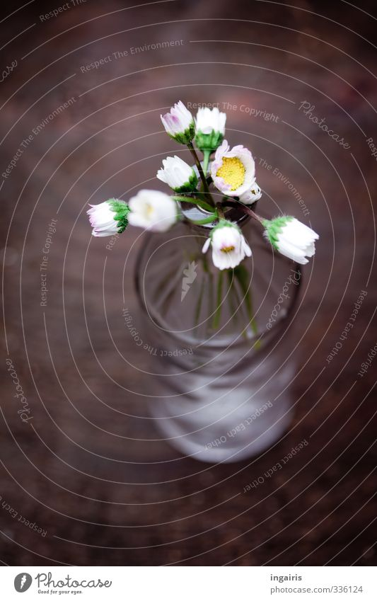 Beautiful White Plant Flower Yellow Wood Gray Small Natural Brown Moody Birthday Decoration Blossoming Near Daisy