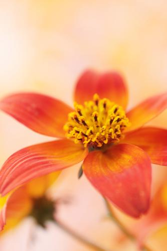 spruced up Nature Plant Spring Summer Autumn Flower Brown Yellow Gold Green Orange Red Exterior shot Interior shot Close-up Macro (Extreme close-up)