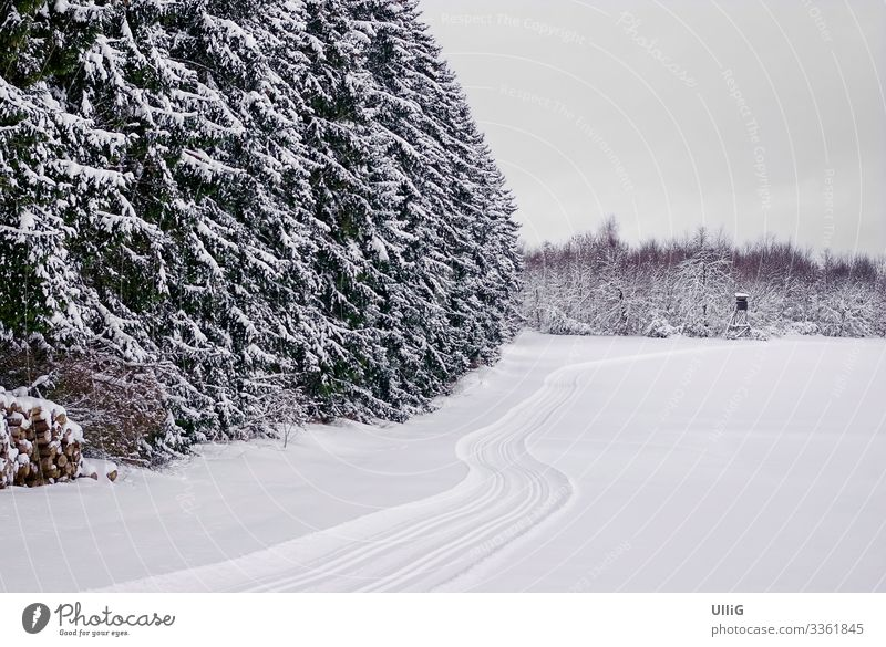 Snow-covered winter forest and open field with cross-country ski run. Cross-country ski trail Forest Winter snowy Field Landscape Nature Tracks