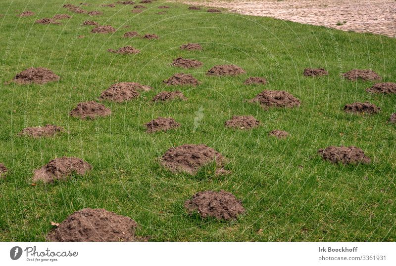 Mole heap in a meadow Earth Lawn Meadow Animal Animal tracks Aggression Natural Brown Green Anger Aggravation Grouchy Animosity Frustration Nature Distress
