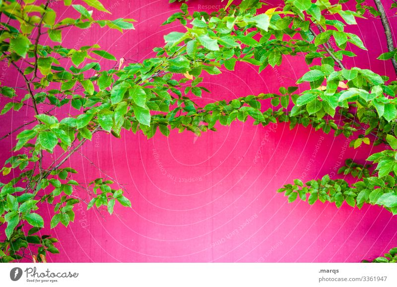 foliage Style Design Spring Summer Leaf Branch Wall (barrier) Wall (building) Illuminate Crazy Green Pink Joy Spring fever Colour Nature Allergy Colour photo