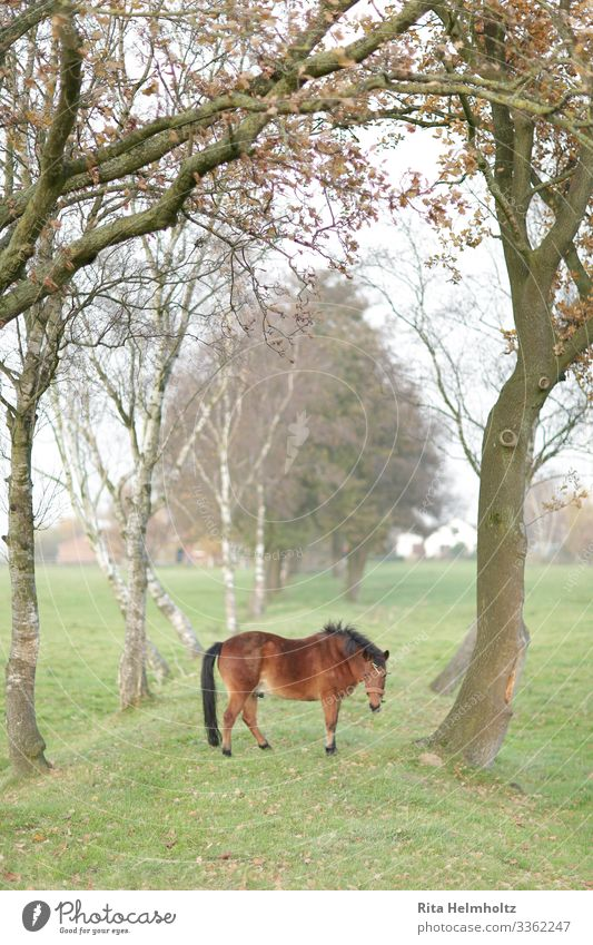 Horse in a dream world Environment Nature Landscape Fog Tree Meadow Field Farm animal 1 Animal Fantastic Friendliness Happiness Happy Cute Positive Brown Green