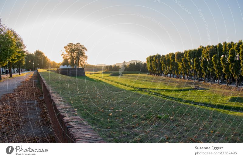 City wall Lucca Nature Landscape Plant Sunrise Sunset Beautiful weather Transience Dusk To go for a walk Lanes & trails Promenade Italy Tuscany Tree Evening sun