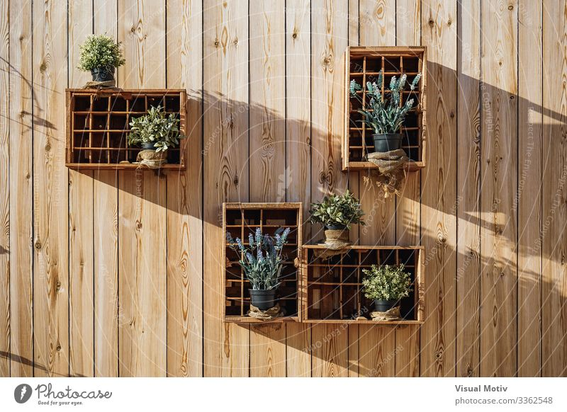 Wooden boxes with aromatic plants Nature Plant Leaf Box Natural Green Tradition Aromatic Lavender Wooden wall Rosemary Oregano Marjoram Mint Sage urban botanic