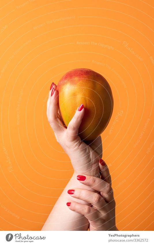 Hands holding a ripe mango. Fresh tropical fruit Fruit Dessert Organic produce Healthy Eating Feminine Cherish colorful diet food dietary dessert fresh fruit