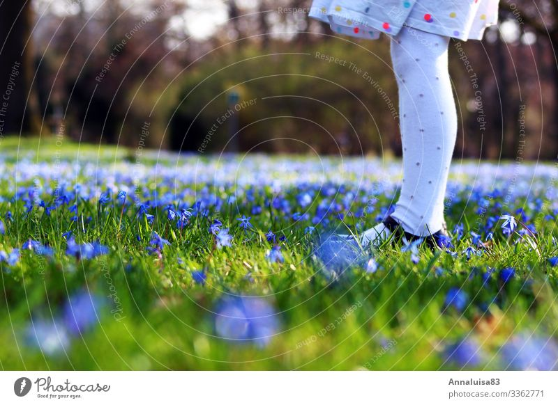 Blue meadow Feminine Child Girl Legs 1 Human being Nature Spring Plant Flower Grass starflower Park Meadow Tights Blossoming To enjoy Illuminate Dream Green