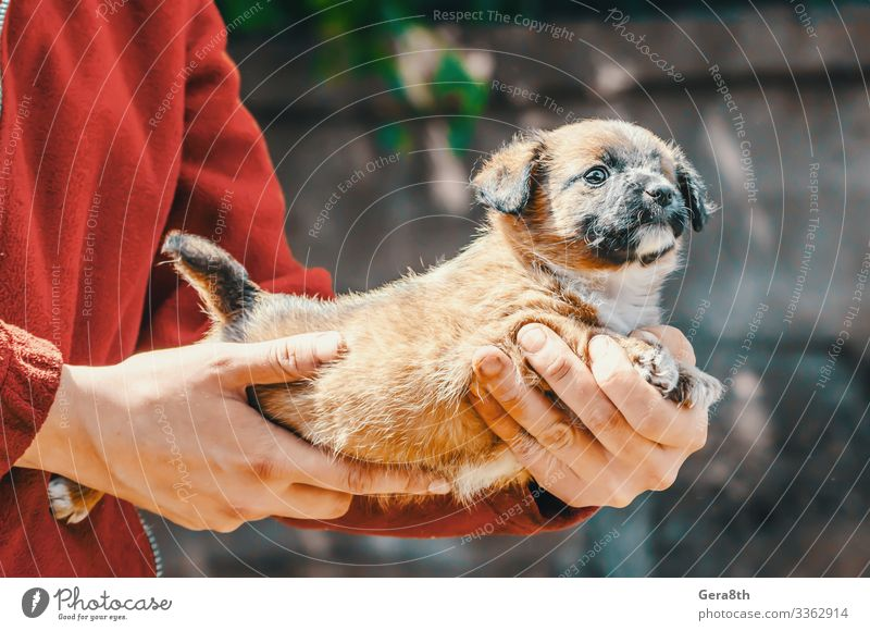 shelter purebred one-eyed puppy in the arms of woman Woman Adults Arm Hand Animal Pet Dog Compassion adopt adopt a dog adopt a puppy adopted adoption