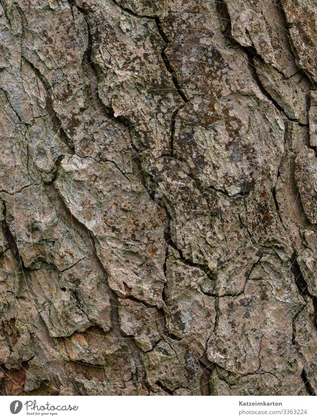 bark Environment Nature Animal Autumn Plant Tree Garden Park Meadow Forest Wood Old Natural Dry Crack & Rip & Tear Tree bark Skin Background picture