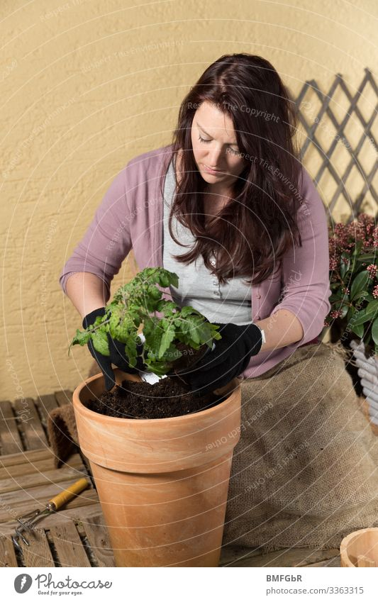 Work on the balcony garden Lifestyle Joy Leisure and hobbies Garden Human being Feminine Young woman Youth (Young adults) Woman Adults 1 30 - 45 years Nature
