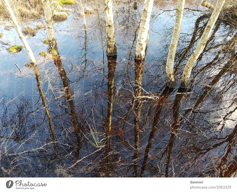 Country under Winter Hiking Nature Landscape Plant Earth Water Tree Moss Birch tree Forest Bog Marsh Flood Natural Blue Brown Green The deep Colour photo