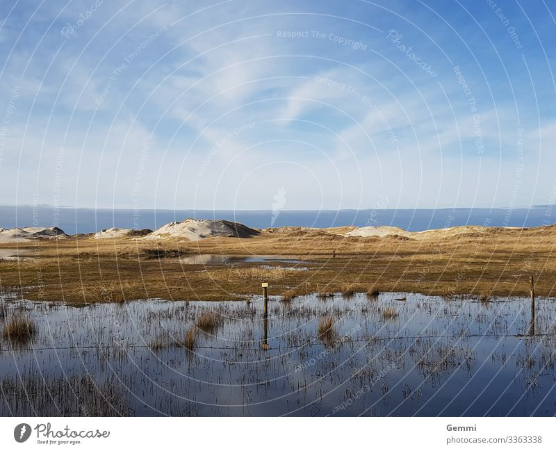 Flood in the dunes Ocean North Sea Island Beach Dune Lake High tide Sand Coast Schleswig-Holstein Winter Sun Marram grass Tourism Exterior shot Nature wide Blue
