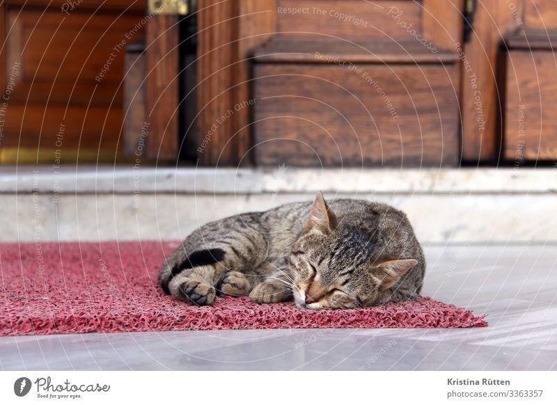 sleepy kitty Door Doormat Animal Cat 1 Sleep Calm Street cat Prowl Free-living Exterior shot Istanbul Turkey Mosque Doorstep Entrance Relaxation Colour photo