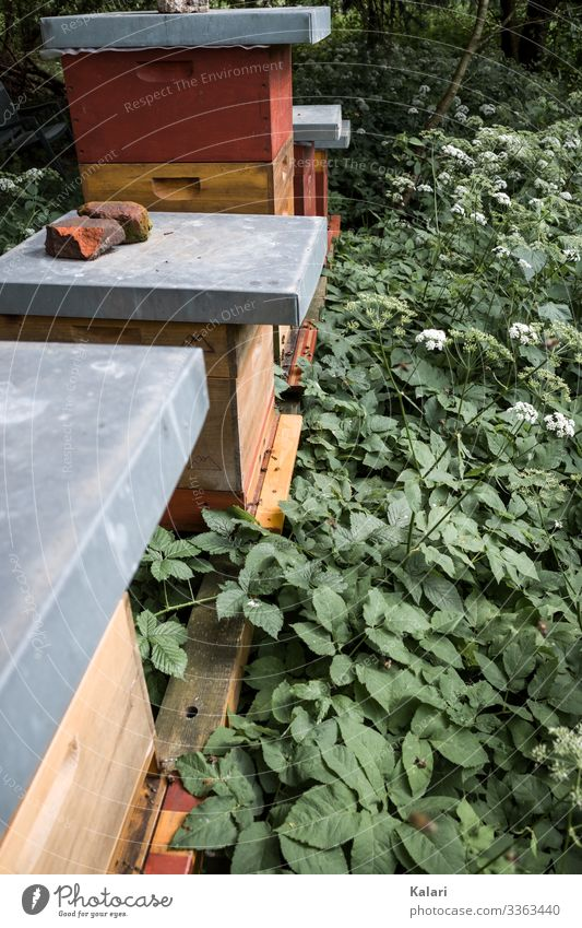 Beehives on the meadow bees drone Diligent Bee-keeper Honey Bee-keeping Plant green garden Leaf Nature Wood wooden Fresh dead Flower Eating Gardening Spring
